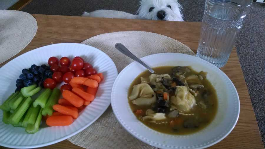 Hayley's Fresh vegetables and fruit, Mushroom and Tortellini Soup:Plate of fresh veggies and fruit for an appetizer, mushroom and tortellini soup for the main course (all made by me). Soup is cheese tortellini with 3 types of mushrooms, vegetable broth, celery and carrots. Doppler wanted some!