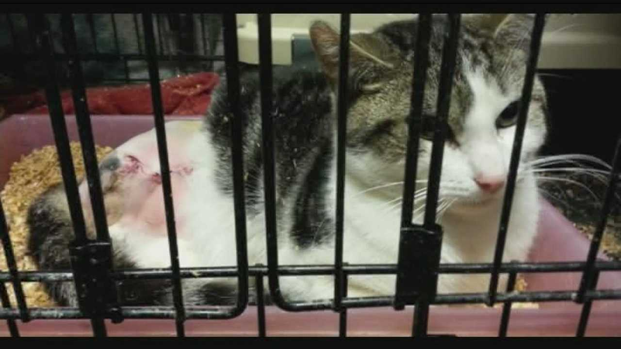 4-29-14 img-Animal rescuers believe someone is trapping stray cats