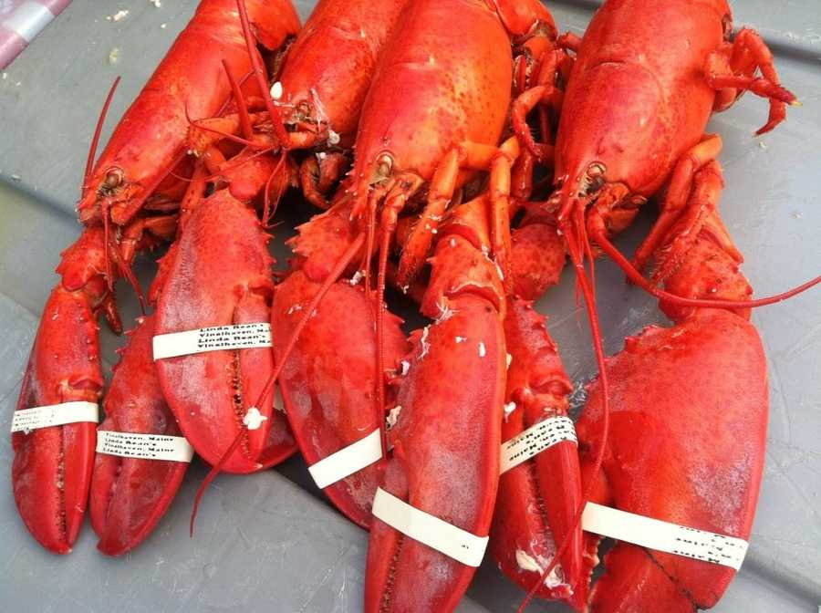 Lobsters turn red when cooked because red pigment is the most stable component of the coloring in a lobster shell.