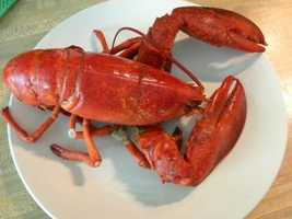 Baby lobsters swim at the surface for 25 days. Only one percent make it to the bottom of the ocean. A near-shore lobster has a 90 percent chance of ending up on someone's dinner plate.