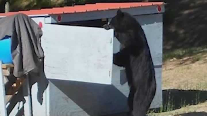 NH Bear Conflicts 7-4-14 - img