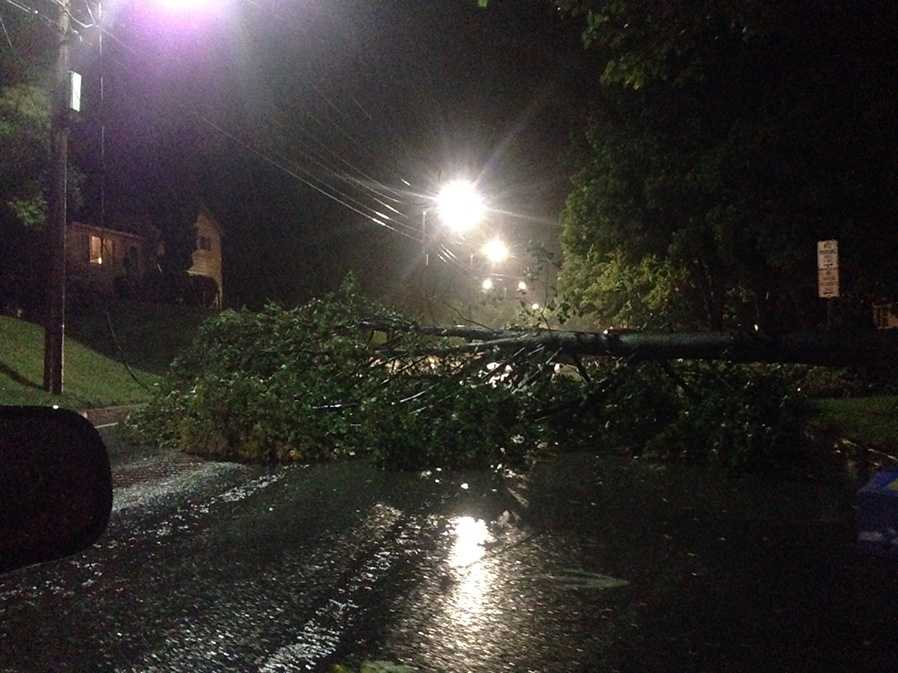 Tree blocks East Ave in Burlington, Vt.