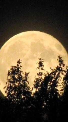 We were treated to a Super Moon last night. You snapped some terrific photos and shared them with us. Here's a collection of some of our favorites.