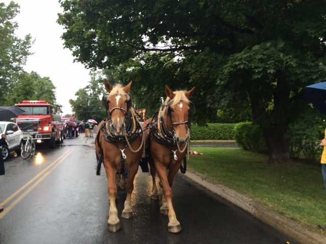 The horses help lead the back part of the Battle of Plattsburgh parade.