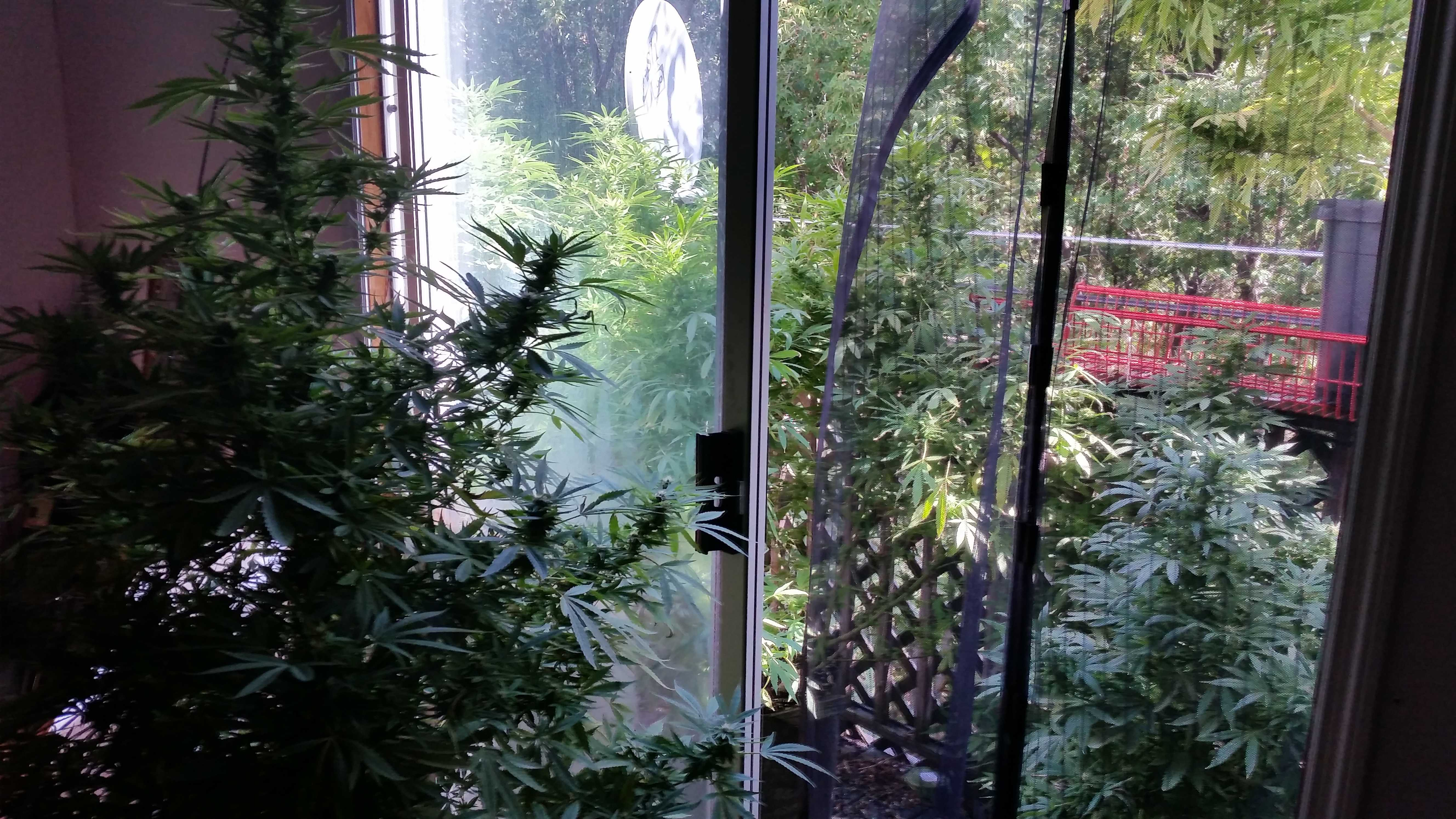The Winooski Police Department seized five 6-foot marijuana plants from an East Allen Street home Sept. 17, 2014.