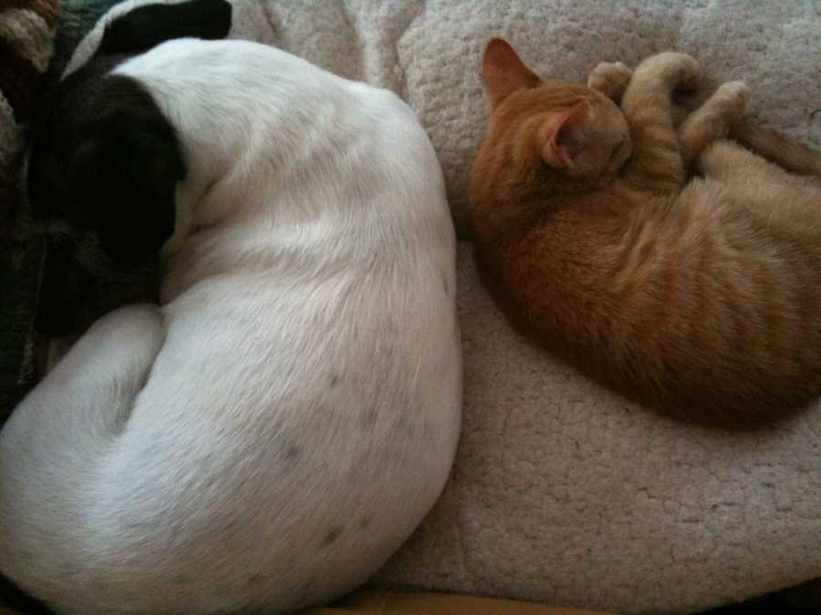 My family also has a Jack Russell named Chuck and a cat named Betsy! They like to chase each other around the house.