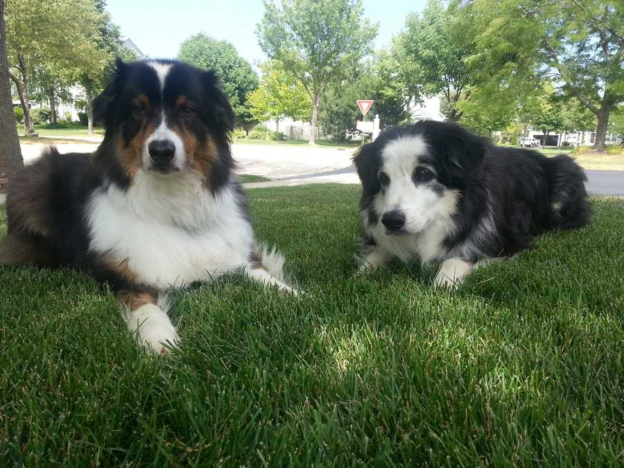 I am one of those people who loves their pets way too much. Dugan and Beau are considered brothers. Aren't they cute!?