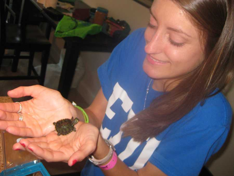This is the day I got my pet turtle, Fitzy. He is now bigger than my hand and quite sassy. I also like sitting in the grass with him, Beau watches him like a hawk, doesn't trust him.