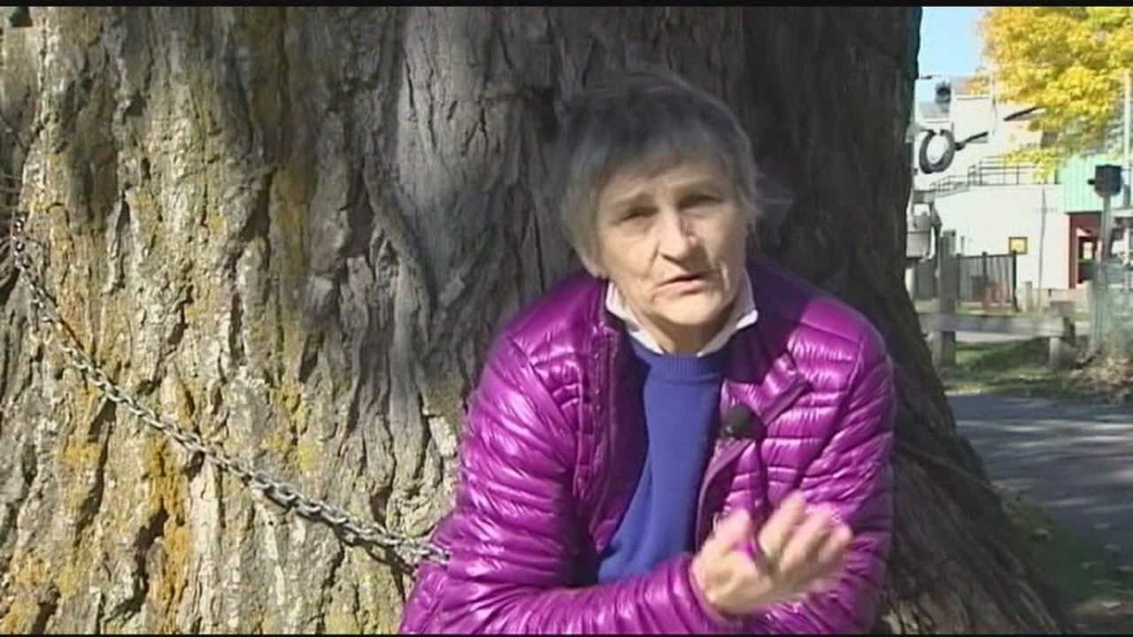 Ann Taylor chained to Burlington tree she's trying to save.