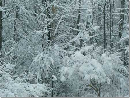 Paul and Donna's snow in Morrisonville.