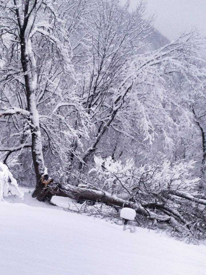 Holly posted this picture of a tree split in half from the snow in Bristol!