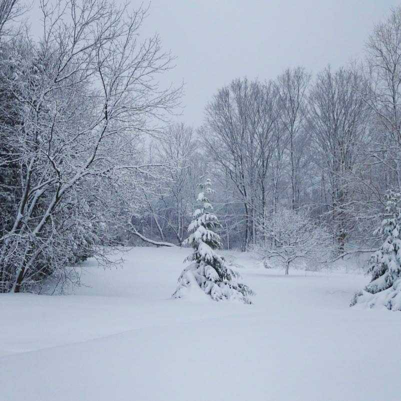 Sarah shared this photo of the snow.
