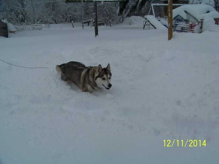 Timothy Angie Heywood says he doesn't like the snow as much as his pup in Mooers Forks, New York.