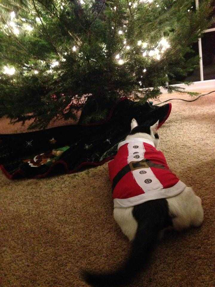 Ashley Miller posted this picture of her cat in a Santa outfit.