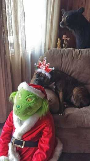 ULocal user, Connie1cool says her pup is waiting for Santa's arrival to Chazy Lake!
