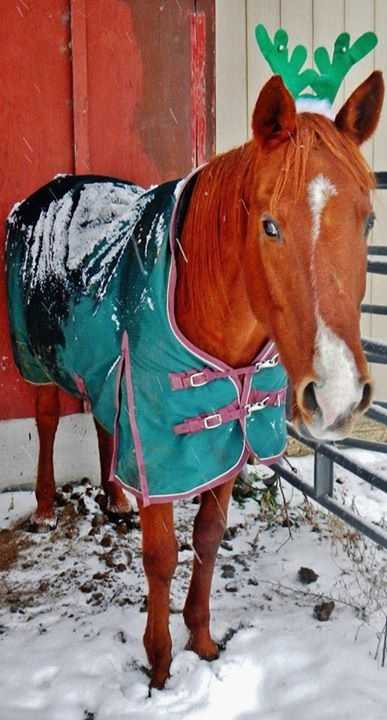 Cats and dogs can't have all the fun! Horses like to be festive too! Thanks Deb Loring for sharing this precious pony picture!