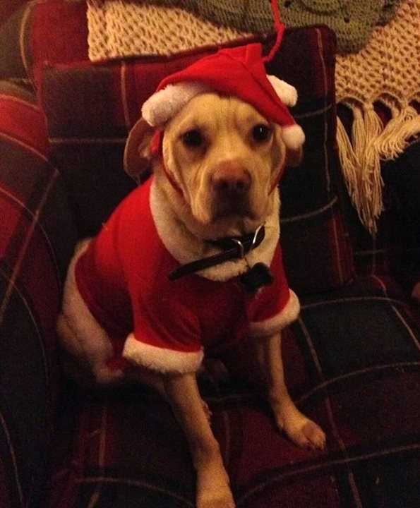 Buddy is ready for Christmas with owner, Francine Audette.