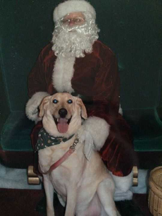 Has anyone else seen a happier pooch than this? Someone loves Santa! Thanks Jennifer D'Addario Page! Your pup is adorable!