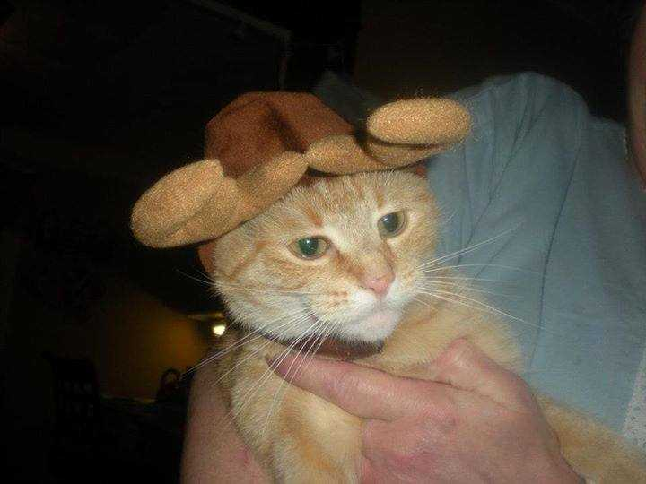 Kristin Bates tried to dress Charlie up as a reindeer, but he is clearly not amused.