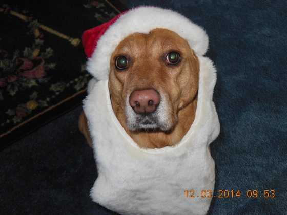 ULocal user posted this photo of Mesha, who took it one step further than the Santa hat, and added the beard!