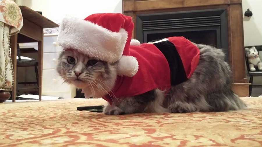 "Robert Miller calls his cat ""Emmy Claus"" this time of year."