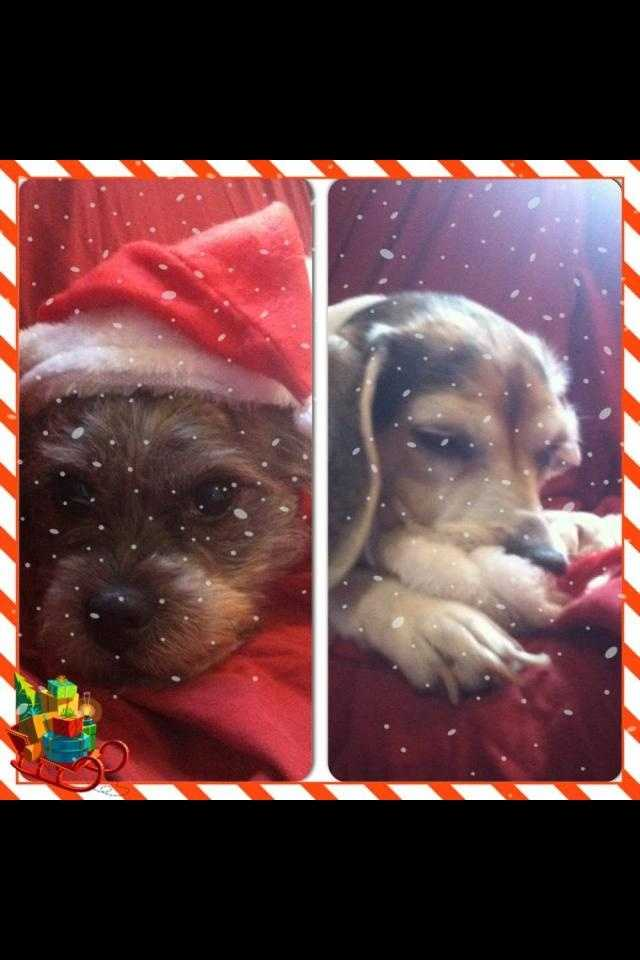 What's better than one Christmas Canine? TWO! Shaleigh Gratton sent us this!