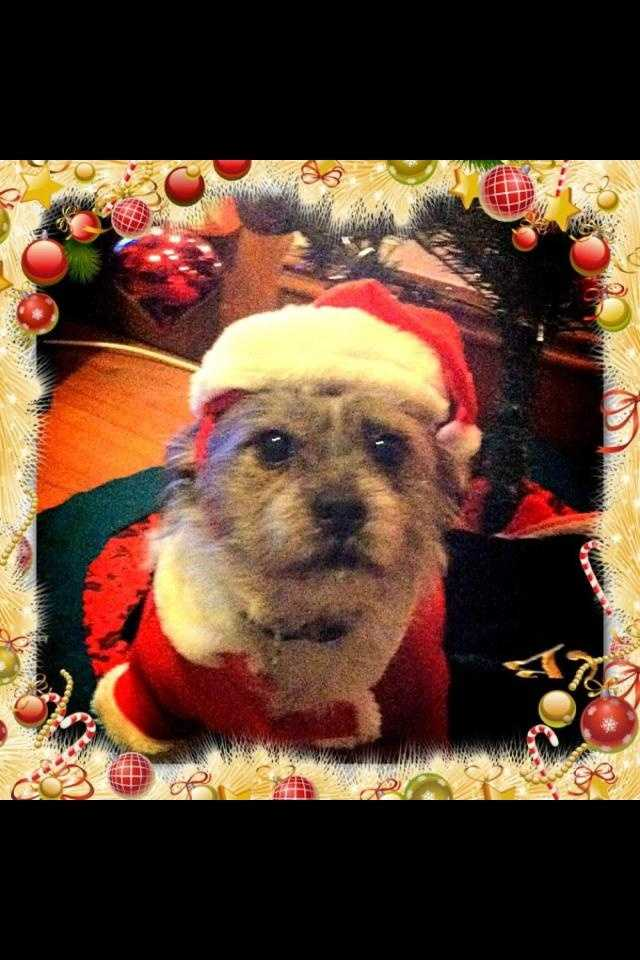 Shaleigha Gratton dressed this pooch up like Santa!