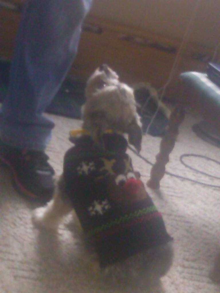 Shawn Bonner Boucher put his pup in a Christmas sweater!