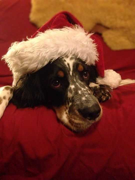 Whitney Northrop says Gemma is already tired of Christmas!