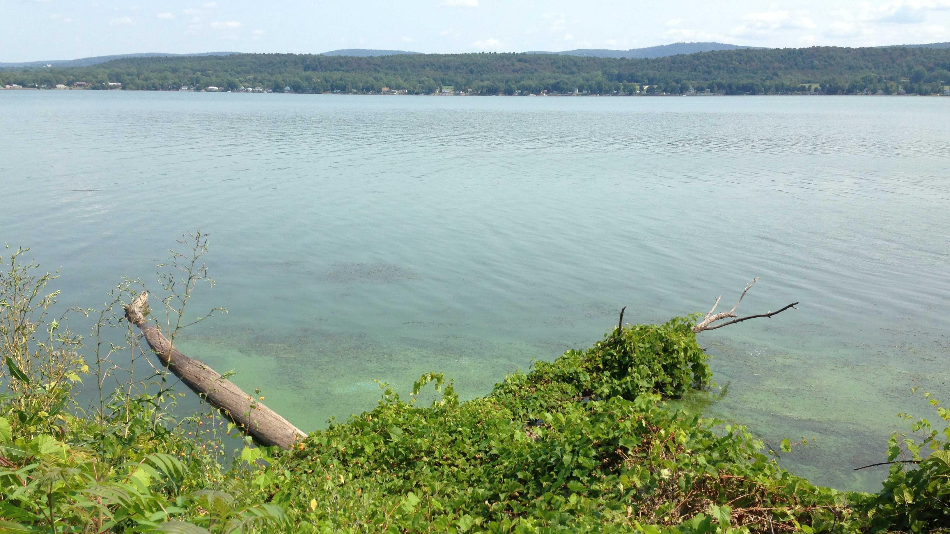 Algae blooms fouled St. Albans Bay on Lake Champlain last summer.