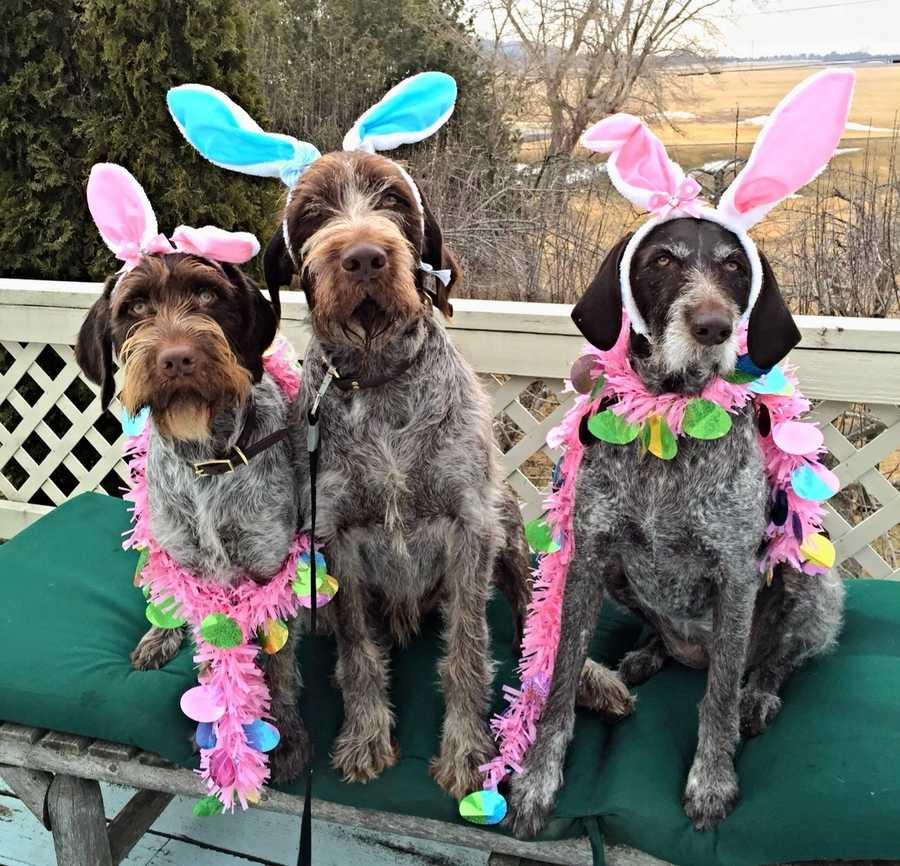 """Mandy sent us this picture of her """"Paddle Pups"""" WyNott, Watson, and Wyeth"""