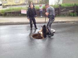 A police dog searches inside underground sewers in Dannemora.
