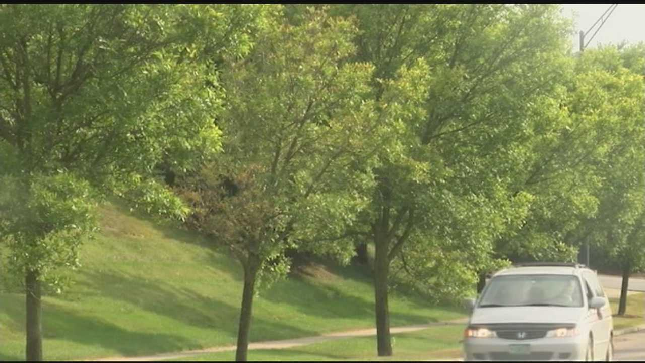 Town officials in Williston want to take preventative measures and cut down trees before they become infected with emerald ash borer.
