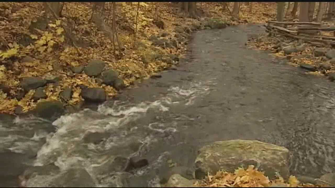 Thousands of adult salmon who have spent the last couple of years roaming Lake Champlain are now returning to their natal home, the brook leading to the state fish hatchery, a sight that biologists say this year is especially impressive.