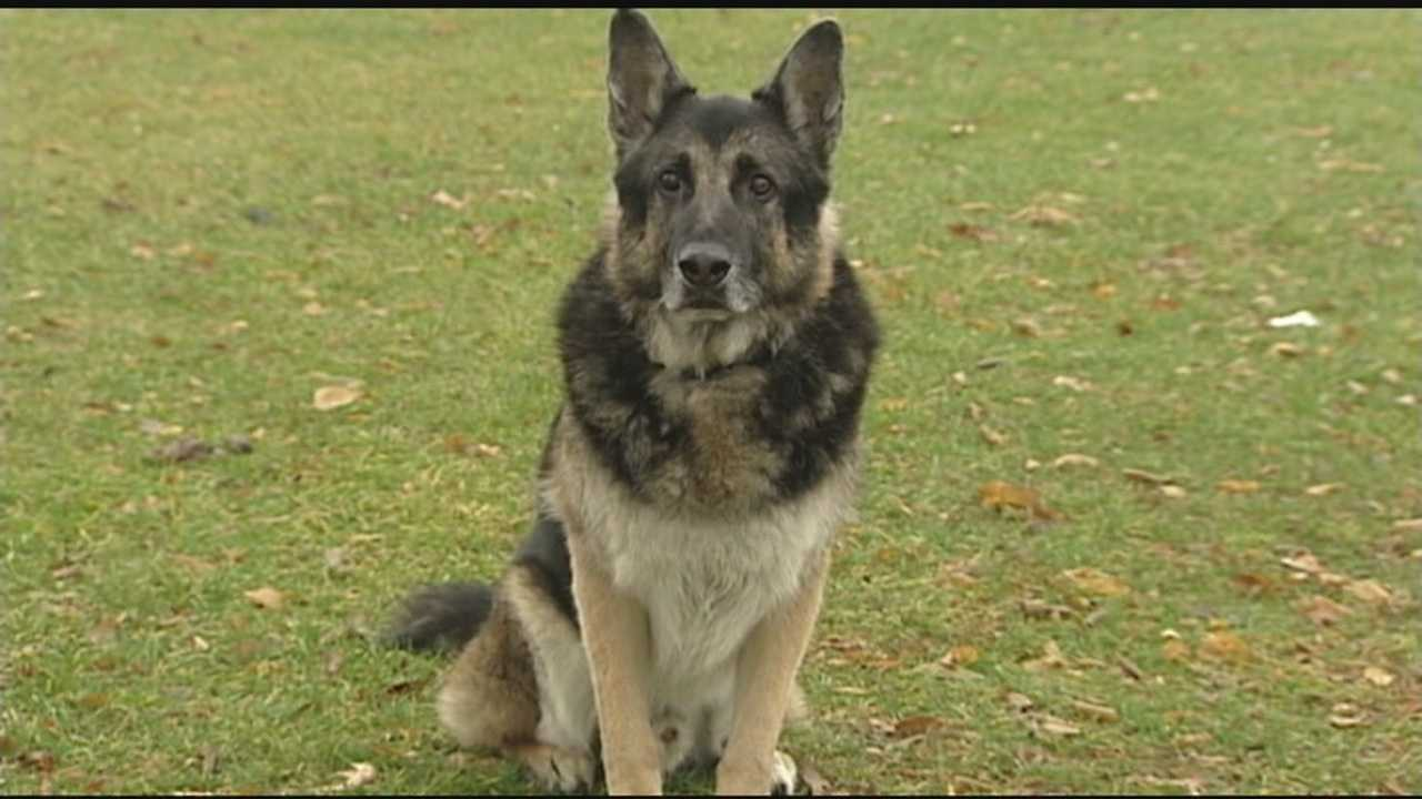 Burlington police K-9 Andre will get more time to chase his tail and relax after dedicating years to the force.