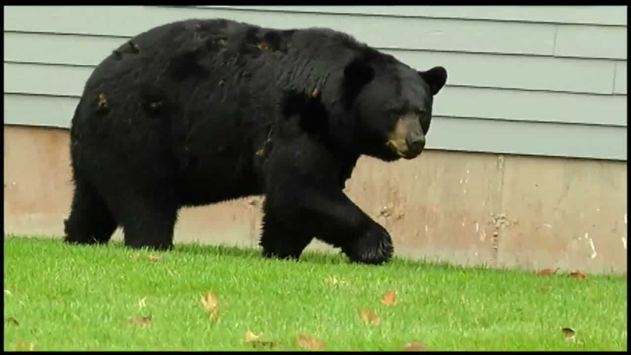 That has wildlife biologists at the Vermont Fish and Wildlife Department now urging homeowners to delay putting out bird seed, to reduce the chances of attracting roaming bears.
