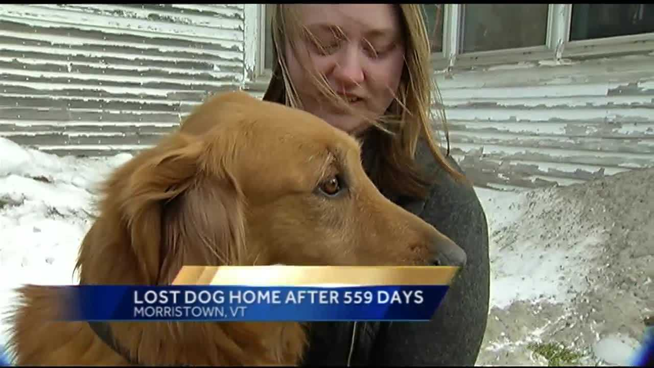 A golden retriever is finally home with his Vermont family, 559 days after he was lost.