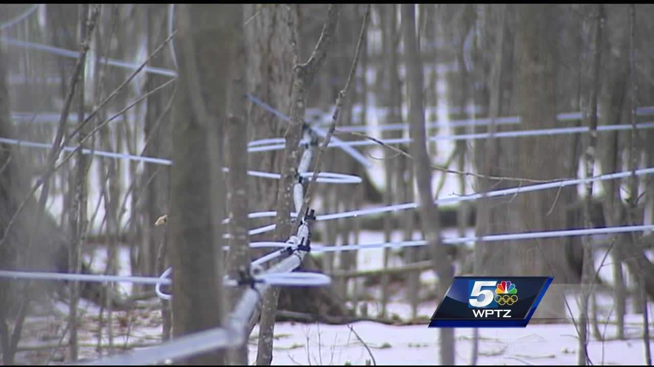 The mild winter is expected to jump-start maple tapping season.