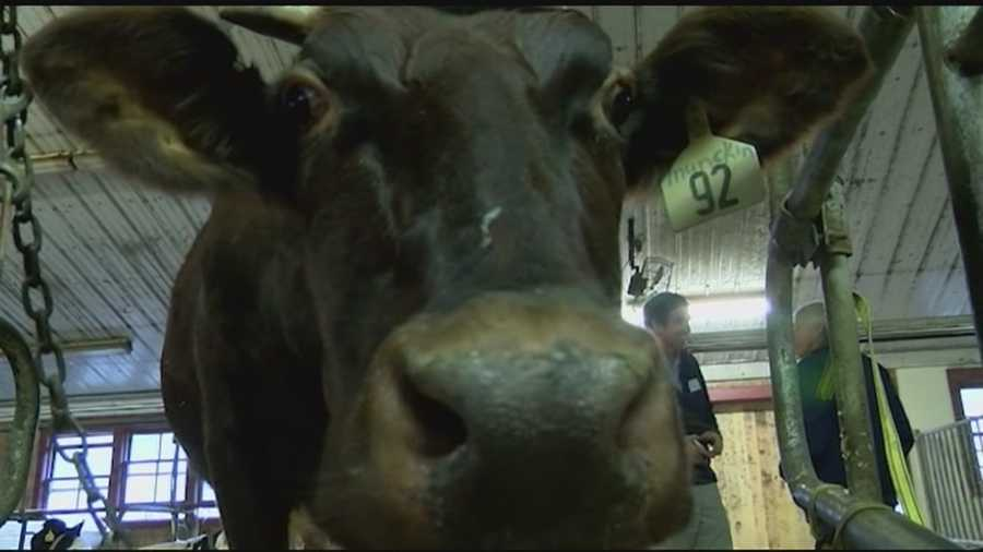 Vermont has nearly one half of the dairy farms in New England.