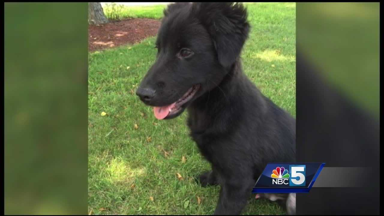 The Plattsburgh Police Department said the puppy was abandoned on Reeves Lane near the former City of Plattsburgh Compost Plant Wednesday afternoon.