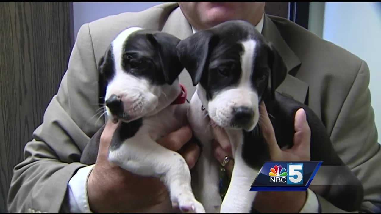 The Plattsburgh Police Department found two puppies, whom it named Frank and George, on Oak Street Monday morning.