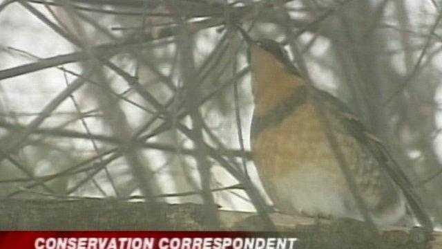 Unique bird has layover in Vermont