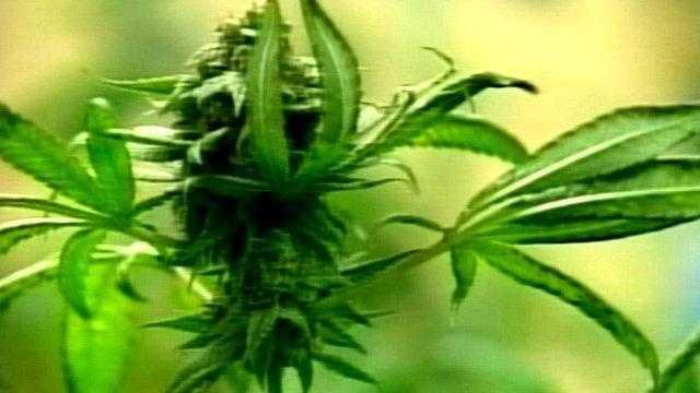 0401 Marijuana Generic - 23029249