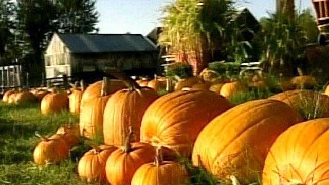 Pumpkin - 20956958