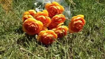 Flowers were left at the crash scene.