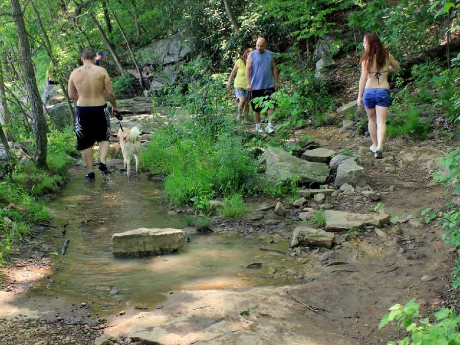 Ohiopyle features many trails through wooded areas that are friendly to pets.