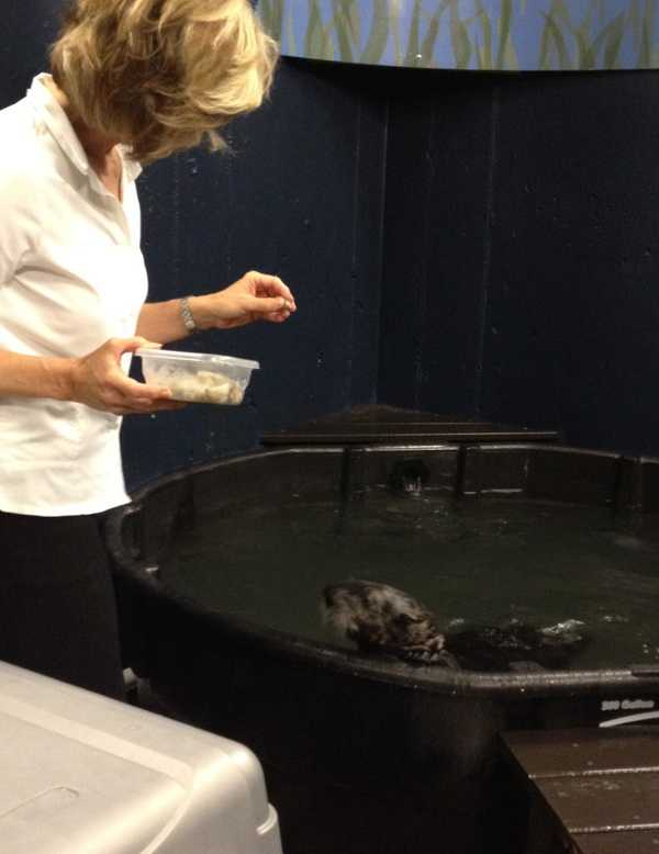 Sally Wiggin learns how to feed squid and shrimp to the pup.