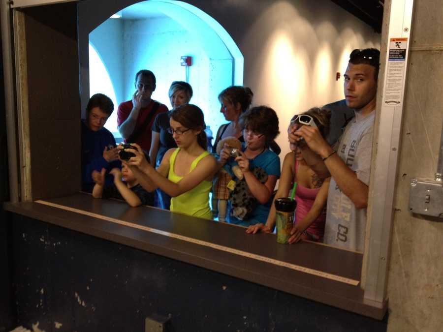 Zoo visitors watch the baby sea otter in his new nursery in the Water's Edge exhibit, next to the polar bear tunnel.