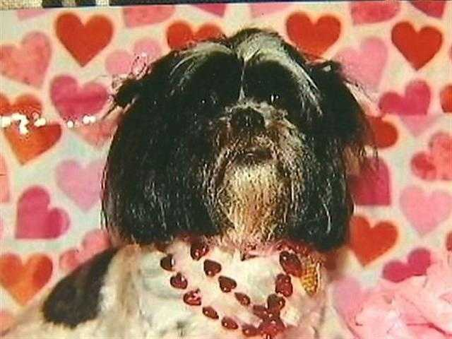 Then, a shrieking sound -- which turned out to be their Shih Tzu, Isabella, mauled and bloodied on a landing at the top of the stairwell. Isabella died seven days later.