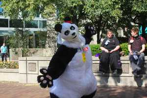 Anthrocon is an annual gathering for people who are fascinated with anthropomorphics -- humanlike animal characters.